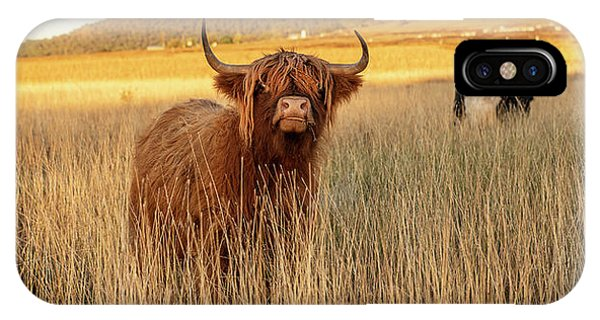 Highland Cows On The Farm IPhone Case