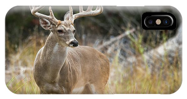 Hill Country Whitetail IPhone Case