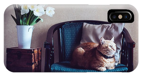 Bouquet iPhone Case - Home Interior, Cat Sitting In An by Daria Minaeva