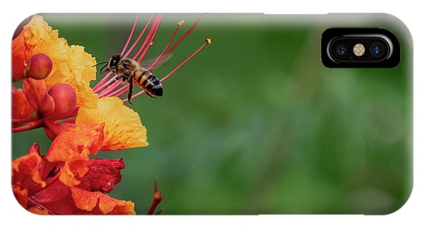 Honey Bee Extraction IPhone Case