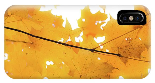 Honey Colored Happiness IPhone Case