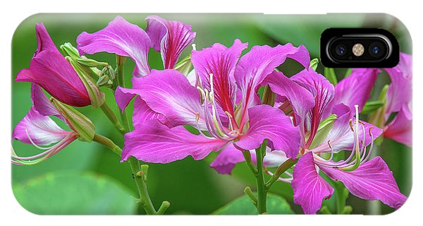 IPhone Case featuring the photograph Hong Kong Orchid Tree Dthn0263 by Gerry Gantt