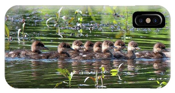 Hooded Merganser Ducklings Dwf0203 IPhone Case