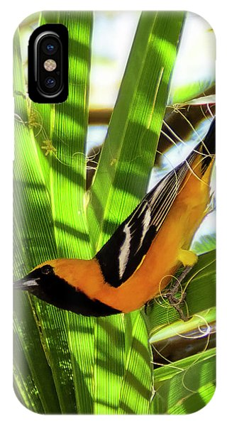 Hooded Oriole V1912 IPhone Case