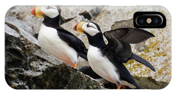 Horned Puffin Pair IPhone Case
