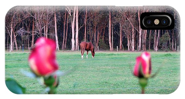 Horse And Roses IPhone Case