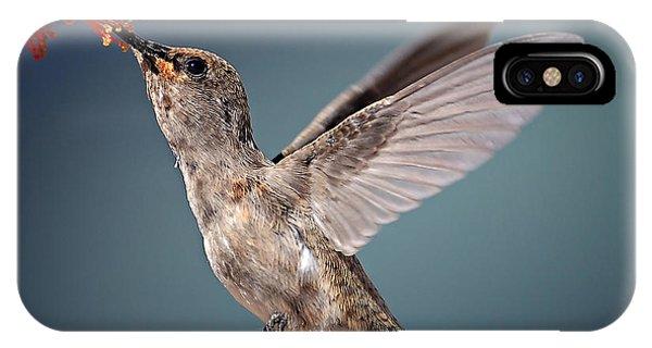 Hummingbirds iPhone Case - Humming Bird In Flight by Quest786