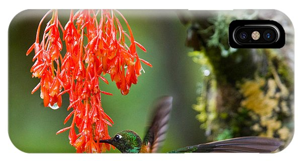 Hummingbirds iPhone Case - Hummingbird Flies To Flower. Ecuador by Gudkov Andrey