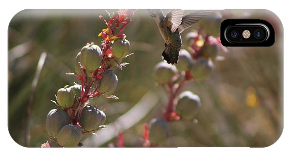 Hummingbird Flying To Red Yucca 3 In 3 IPhone Case