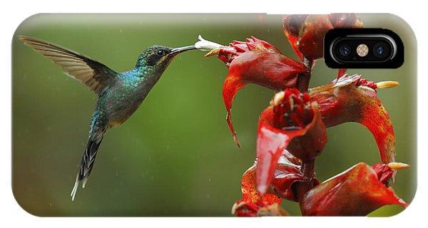 Central America iPhone Case - Hummingbird Green Hermit, Phaethornis by Ondrej Prosicky