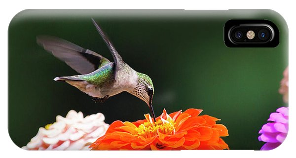 Humming Bird iPhone Case - Hummingbird In Flight With Orange Zinnia Flower by Christina Rollo