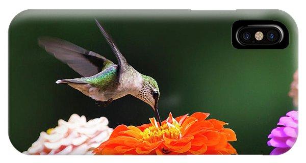 Hummingbird In Flight With Orange Zinnia Flower IPhone Case