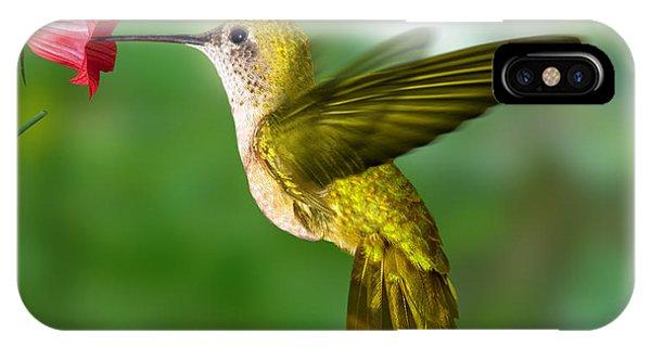 Hummingbirds iPhone Case - Hummingbird by Ktsdesign
