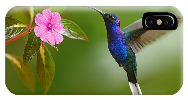 Eating iPhone Case - Hummingbird Violet Sabrewing Flying by Ondrej Prosicky