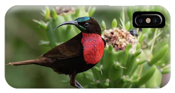 Hunter's Sunbird IPhone Case