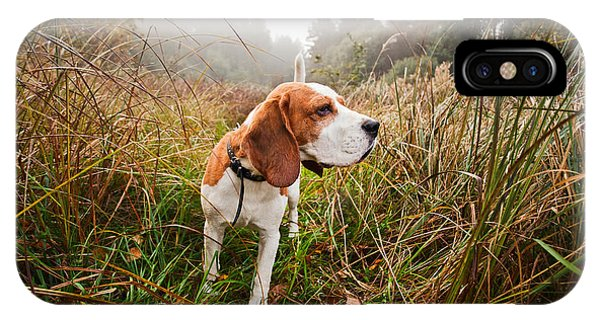 Discovery iPhone Case - Hunting Dog In The Foggy Morning In by Igor Normann