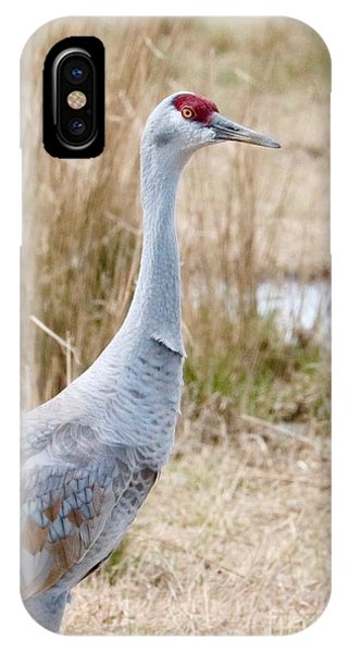 iPhone Case - I See You Sandhill by Carol Groenen
