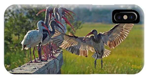 Ibis Joining Featured Friends On Jekyll Island IPhone Case