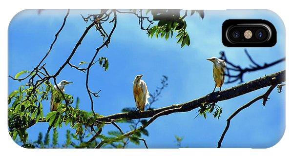 Ibis Perch IPhone Case