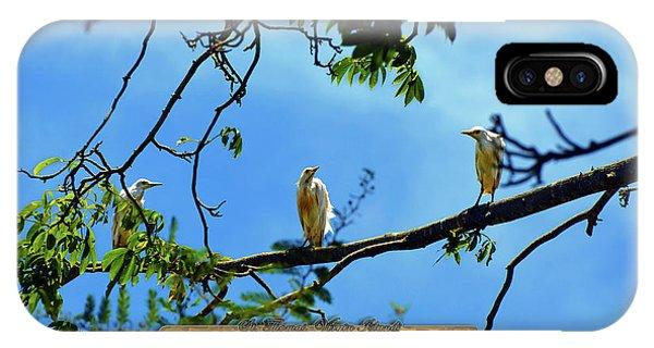 Ibis Perch - Virgin Nature Series IPhone Case
