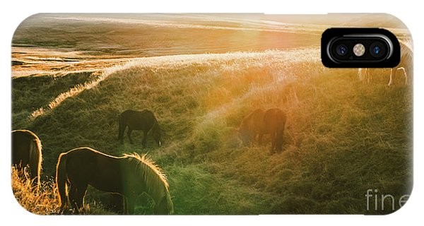 Icelandic Landscapes, Sunset In A Meadow With Horses Grazing  Ba IPhone Case