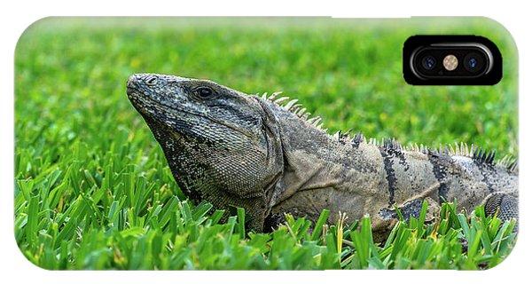 Iguana In Grass IPhone Case