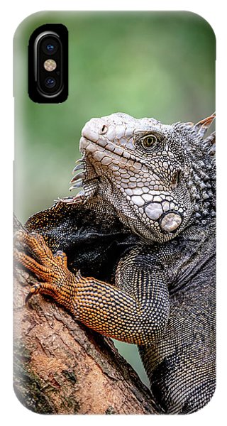 IPhone Case featuring the photograph Iguana's Portrait by Francisco Gomez