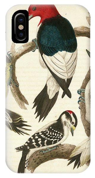 1. Red-headed Woodpecker. 2. Yellow-bellied Woodpecker. 3. Hairy Woodpecker. 4. Downy Woodpecker. IPhone Case