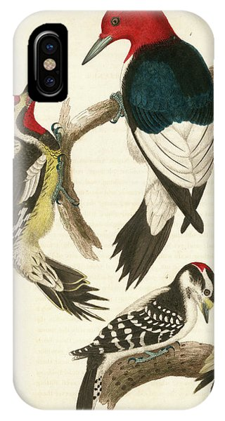 1. Red-headed Woodpecker. 2. Yellow-bellied Woodpecker. 3. Hairy Woodpecker. 4. Downy Woodpecker. IPhone Case