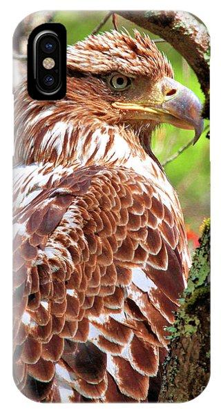 Immature Eagle IPhone Case