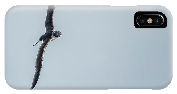 Immature Masked Booby, No. 5 Sq IPhone Case