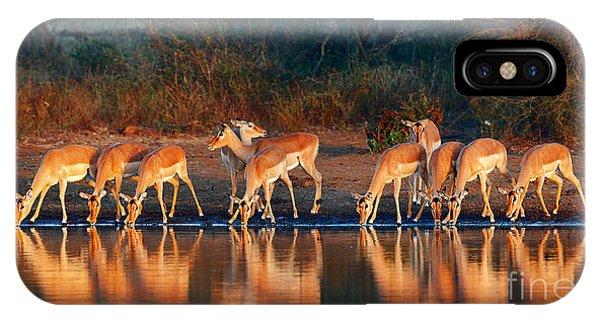 Horizontal iPhone Case - Impala Herd Aepyceros Melampus Drinking by Johan Swanepoel