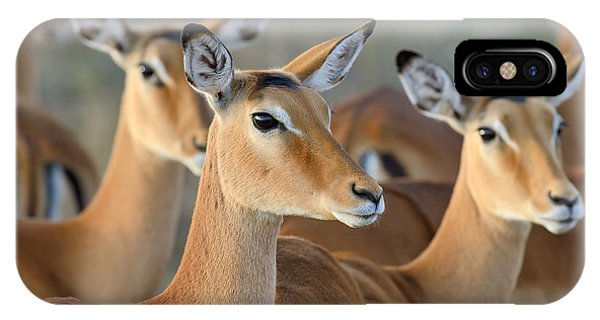 Adult iPhone Case - Impala On Savanna In National Park Of by Volodymyr Burdiak
