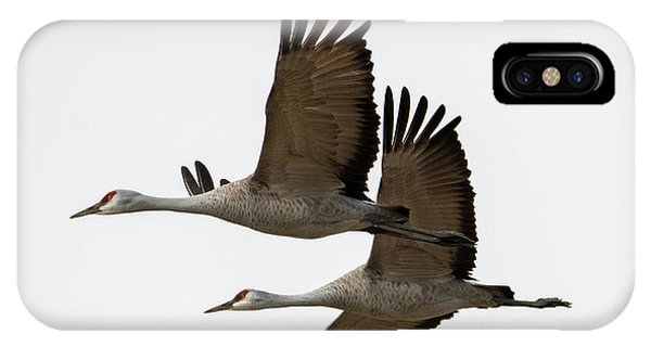 Sandhill Crane iPhone Case - In Synch by Mike Dawson