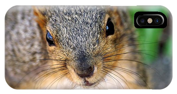 In Your Face Fox Squirrel IPhone Case