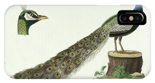 Peafowl iPhone Case - Indian Peafowl by Cornelius Nozeman