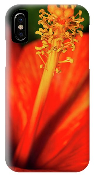 IPhone Case featuring the photograph Into A Flower by Dheeraj Mutha