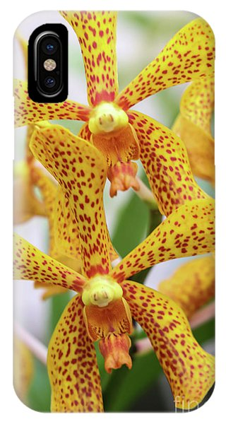 Intriguing Yellow Spider Orchids IPhone Case