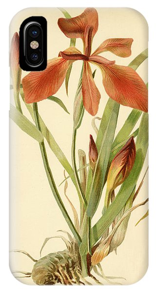 Iris Cuprea Copper Iris.  IPhone Case