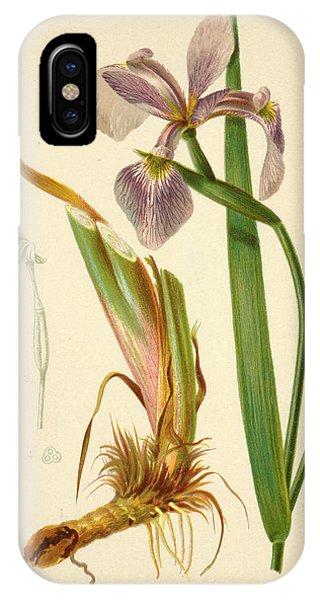 Iris Versicolor Blue Flag IPhone Case