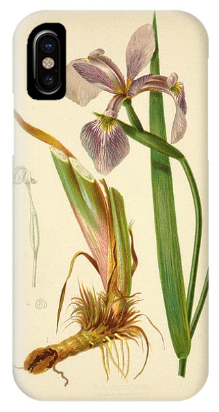 Iris Versicolor Blue Flag IPhone Case