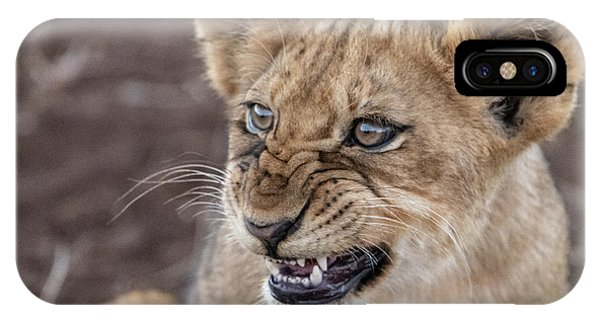 Irritated Lion Cub IPhone Case