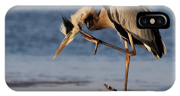 Itchy - Great Blue Heron IPhone Case