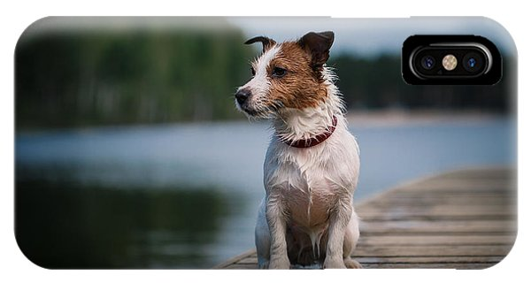 Purebred iPhone Case - Jack Russell Terrier Dog Playing In by Dezy