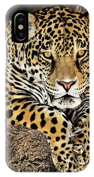 Jaguar Portrait Wildlife Rescue IPhone Case