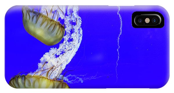 IPhone Case featuring the photograph Jellys by Bob Cournoyer