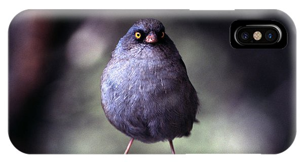 Central America iPhone Case - Junco by Steffen Foerster