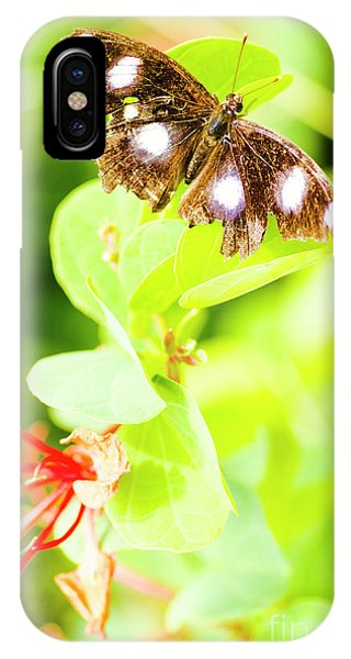 Moth iPhone Case - Jungle Bug by Jorgo Photography - Wall Art Gallery