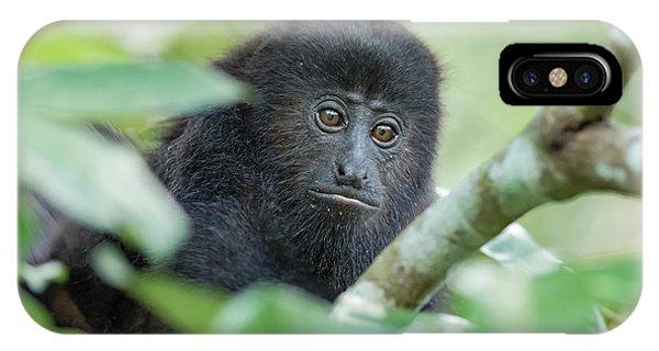 Belize iPhone Case - Juvenile Black Howler Monkey, Community by William Sutton