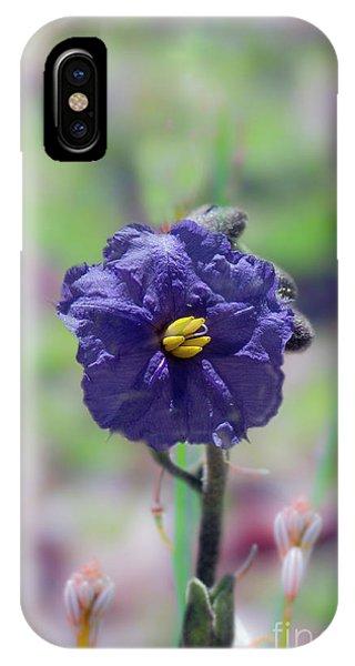 IPhone Case featuring the photograph Kangaroo Apple, Solanum Aviculare by Elaine Teague